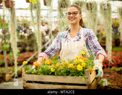 Jolie Jeune femme tenant une boîte en bois plein de fleurs de printemps dans la serre