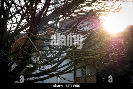 Chat debout sur un rouge au coucher du soleil stree Banque D'Images