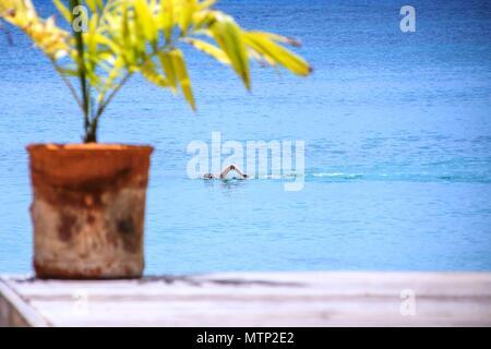 Nageur solitaire de la côte vu de quai à Antigua Banque D'Images