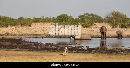 Les éléphants, girafes et impala à un trou d'eau dans le parc national d'Etosha Banque D'Images