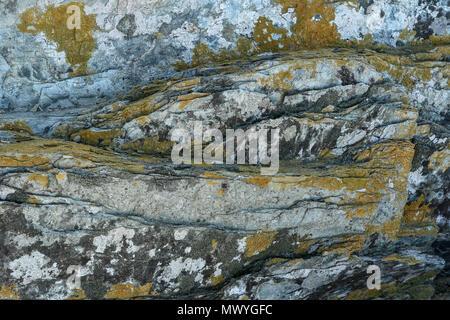 Close-up, résumé des tendances rock sur la plage, à l'aire protégée, Tsitsikamma, Garden Route, Le Cap, Afrique du Sud Banque D'Images