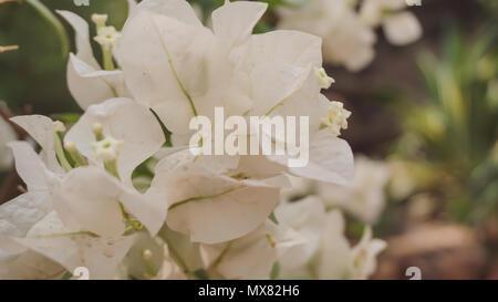 De belles images de fleurs dans un grand jardin Banque D'Images