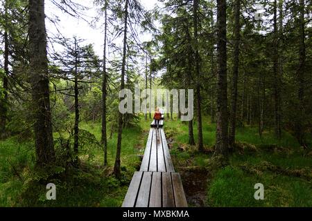 Jeune garçon solitaire en orange Veste pluie marche sur sentier en bois à travers forêt de pins dans la pluie Banque D'Images