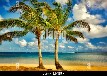 Deux palmiers à Anini Beach. Kauai, Hawaii. Banque D'Images