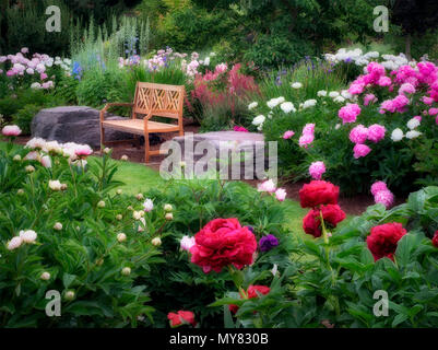 Jardin de la pivoine et de banc. Adleman jardin de pivoines, Salem, Oregon Banque D'Images