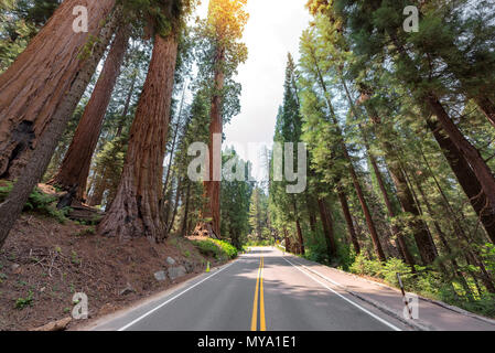 Road Trip in Sequoia National Park, Californie Banque D'Images