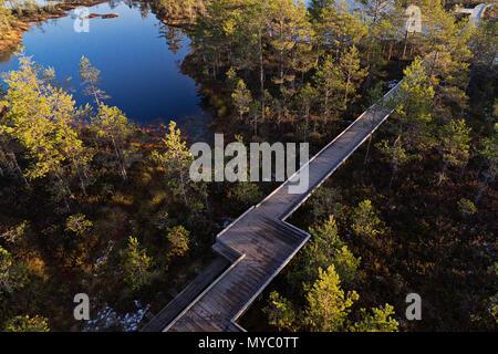 Vue panoramique de drone de trottoir de bois de terrasse entre lac et marais de la réserve naturelle du parc. Paysage du Marais marais du point de vue de drones Banque D'Images