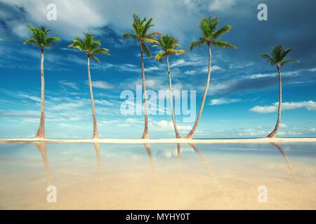 Des cocotiers sur la plage de sable blanc de Punta Cana, République dominicaine. Banque D'Images
