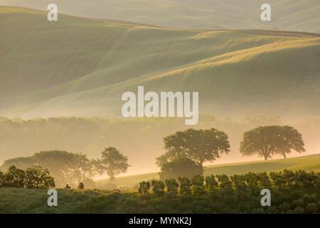 Brouillard dans la vallée au Val d'Orcia, tôt le matin à l'aube, San Quirico d'Orcia, près de Pienza, Toscane, Italie en mai Banque D'Images