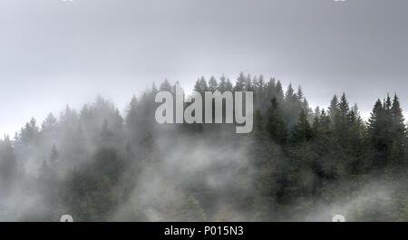 Arbres et forêt dans le brouillard et la brume dans les collines de la Suisse Banque D'Images