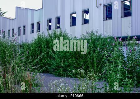 Dégradation de l'environnement dans une zone industrielle abandonnée dans le quartier de Milan, Italie