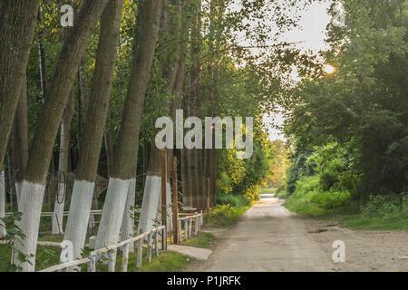 Chemin à côté du trunk en bois de coton peint en blanc près de Belgrade en Serbie Banque D'Images