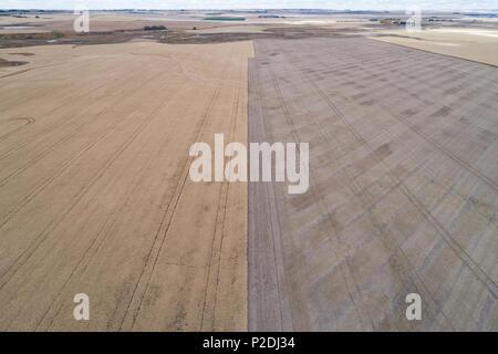 Champ de blé moissonné Banque D'Images