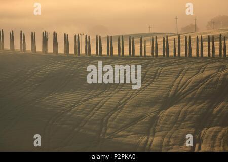 Italie, Toscane, allée de cyprès dans le brouillard, au coeur du Val d'Orcia, classé au Patrimoine Mondial par l'UNESCO Banque D'Images