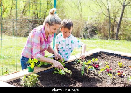 Belle mère et de son fils blonde salade de plantation en double dans son jardin Banque D'Images