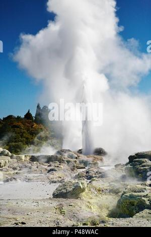 L'éruption du geyser Pohutu, Nouvelle-Zélande Banque D'Images