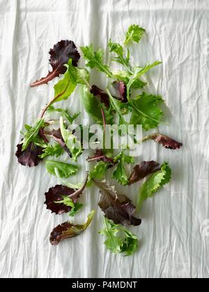 Divers jeunes feuilles de laitue mélangées (vu du dessus) Banque D'Images