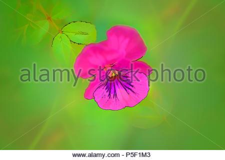 Illustration D Une Fleur Simple Banque D Images Photo Stock