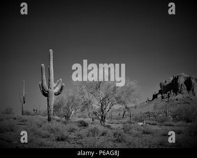 La Superstition Mountain, Apache Junction, Arizona et Saguaro cactus en climat désertique. Banque D'Images