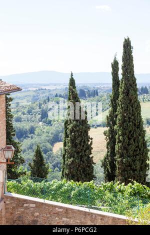 Un trio de cyprès (Cupressus sempervirens) dans une propriété de San Gimignano (Toscane - Italie). Une signature caractéristique du paysage toscan. Banque D'Images