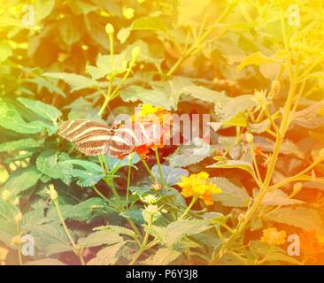 Abstract background image floue. papillon sur les fleurs. Banque D'Images