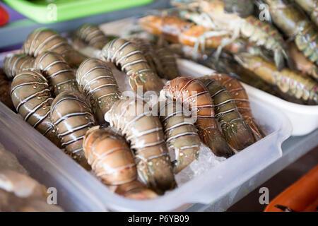 Les homards de la glace sur les tablettes des magasins pour contrôler la température sur des plateaux de couleurs différentes.. Banque D'Images