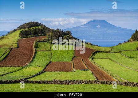 Portugal, Azores, Sao Jorge, Rosais de champs et le Volcan Pico Banque D'Images