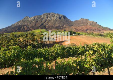 L'Afrique du Sud, Western Cape, Stellenbosch, Tokara Wine Estate Banque D'Images