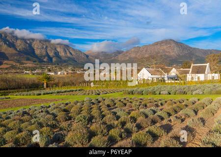 Mullineux Family Wines Estate et Leeu, Franschhoek, Western Cape, Afrique du Sud Banque D'Images