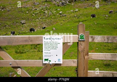 Gros plan du panneau d'avertissement de lambing à la porte avec des moutons en arrière-plan au printemps Cumbria Angleterre Royaume-Uni GB Grande-Bretagne Banque D'Images