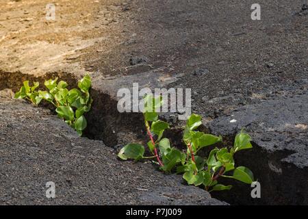 Jeune plante poussant dans le sol fissuré dans la pierre. À la lumière avec. Nouvelle vie écologie croissance financière business concept.