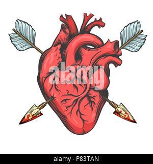 Les droits de l'cœur percé par deux flèches tirées dans le style de tatouage isolé sur fond blanc. Vector Illustration. Banque D'Images