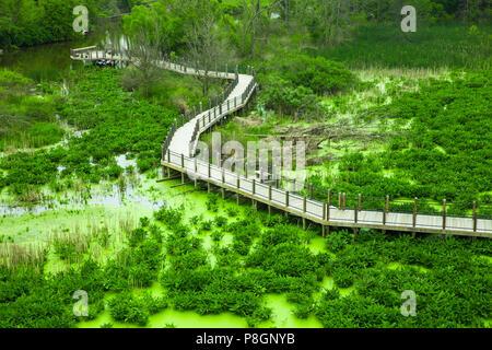 Vue sur le marais des zones humides avec des plantes, de l'allée et les algues vu de dessus Banque D'Images