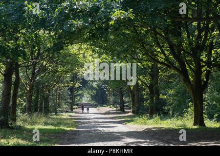 Deux personnes dans la distance avec dos à l'appareil photo marche loin vers le bas d'un pays tranquille allée cavalière entre les rangées d'arbres dans Rivington, Lancashire Banque D'Images