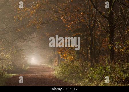 Piste en forêt en automne Banque D'Images
