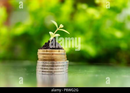 Les pièces d'argent et d'or dans le sol avec jeune plant sur fond vert. Concept de croissance de l'argent. Banque D'Images