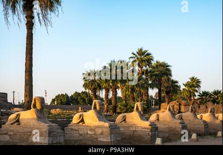 Avenue de Sphinx, route de procession entre Karnak et Louxor, Egypte, l'Afrique avec les sphinx tête Banque D'Images