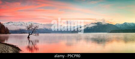 Un cololourful lever du soleil sur un matin d'hiver glacial au Lac Wanaka, dans l'île du sud de Nouvelle-Zélande, avec le fameux arbre, présentés comme les plus... Banque D'Images