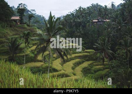 Tegalalang Ceking rizières à Ubud, Bali Banque D'Images