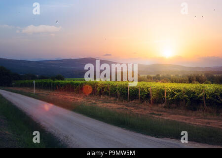Lever de Soleil sur le vignoble de raisin; été winery paysage matin région Banque D'Images