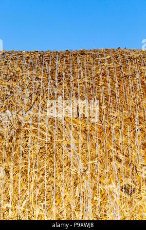 La ficelle blanche et corde paille après la collecte des balles de céréales, libre contre un ciel bleu Banque D'Images