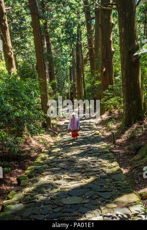 Pèlerinage de Kumano kodo. Daimon-zaka slope. Centenaire cèdre japonais. La préfecture de Wakayama. Région du Kansai. L'UNESCO. Le Japon