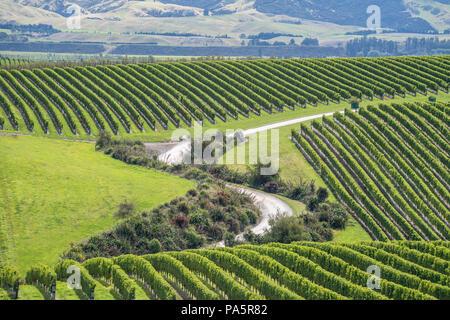 Vignes, région de Marlborough, île du Sud, Nouvelle-Zélande Banque D'Images