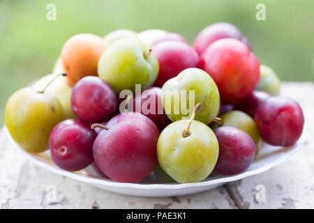 Les abricots, les pommes, mirabelle, prune verte (ume) et les prunes. Les fruits d'été sur l'assiette. Banque D'Images