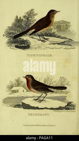 Un traité pratique sur la chanson les oiseaux (la plaque (7))