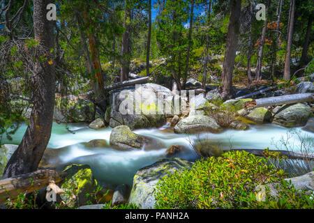 L'eau turquoise du Yosemite Creek rapids circulant sur de grosses pierres dans la forêt le long de Tioga Pass - Paysages du Parc National Yosemite Banque D'Images