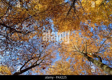 Forêt d'automne dans la campagne allemande Couverture des arbres contre l'horizon Banque D'Images