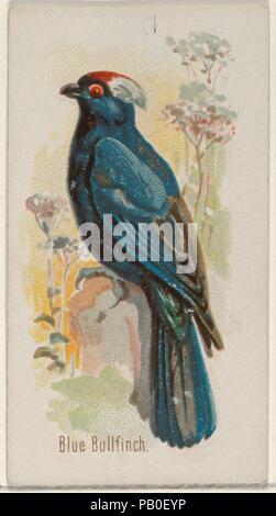 """Bouvreuil bleu, du chant des oiseaux de la série mondiale (N23) pour Allen & Ginter Cigarettes. Fiche Technique: Dimensions: 2 3/4 x 1 1/2 in. (7 x 3,8 cm). Lithographe: George S. Harris & Sons (Américain, Philadelphie). Editeur: Allen & Ginter (Américain, Richmond, Virginie). Date: 1890. Les cartes commerciales de l 'chant oiseaux du monde"""" (N23), publié en 1890 dans un jeu de 50 cartes pour promouvoir Allen & Ginter cigarettes d'une marque. Musée: Metropolitan Museum of Art, New York, USA. Banque D'Images"""