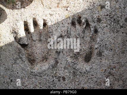 L'empreinte des mains adultes dans le béton Banque D'Images