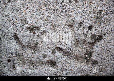 Des empreintes de l'enfant fixé dans le béton Banque D'Images